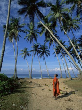 Buddhist Monk Looking up at Palm Trees Between Unawatuna and Weligama, Sri Lanka