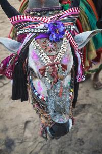 Decorated Cow, Goa, India, Asia by Yadid Levy
