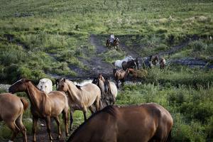 Gaucho with Horses at Estancia Los Potreros, Cordoba Province, Argentina, South America by Yadid Levy