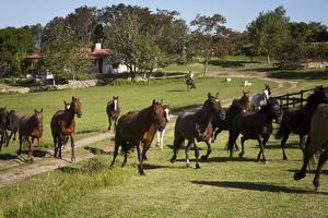 Horses at Estancia Los Potreros, Cordoba Province, Argentina, South America by Yadid Levy