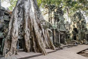 Ruins of the Ta Prohm Temple, Angkor, UNESCO World Heritage Site, Cambodia, Indochina by Yadid Levy