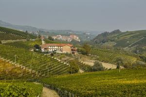 View over Barolo Village and Vineyards, Langhe, Cuneo District, Piedmont, Italy, Europe by Yadid Levy