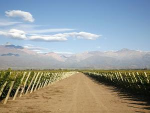 Vineyards and the Andes Mountains in Lujan De Cuyo, Mendoza, Argentina, South America by Yadid Levy