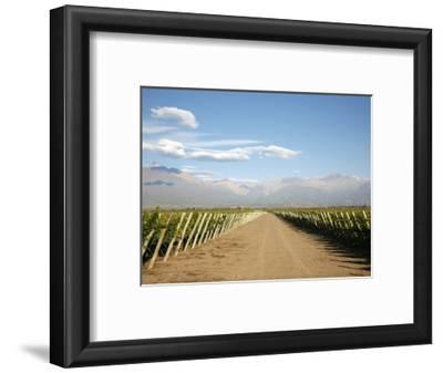 Vineyards and the Andes Mountains in Lujan De Cuyo, Mendoza, Argentina, South America
