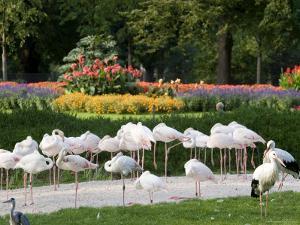 Wilhelma Zoo and Botanical Gardens, Stuttgart, Baden Wurttemberg, Germany by Yadid Levy