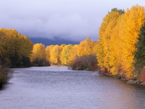 Yakima River and Trees in Autumn, Near Cle Elum, Kittitas County, Washington, USA-Jamie & Judy Wild-Photographic Print