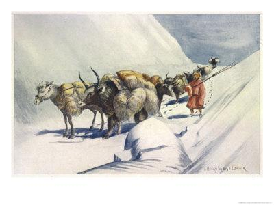 https://imgc.artprintimages.com/img/print/yaks-and-ponies-carrying-wool-from-tibet-into-india_u-l-ot5tk0.jpg?p=0