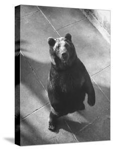 Bear Pit at Berne by Yale Joel