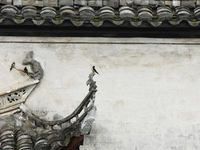 Birds on tiled roof in Xidi, China