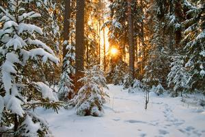 Beautiful Winter Landscape with Sunset in the Forest by yanikap