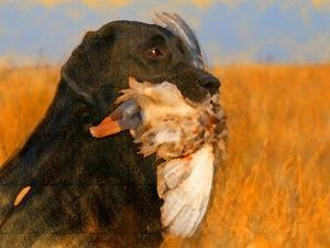 Oil Painting Portrait Of Black Labrador With Duck by Yarvet