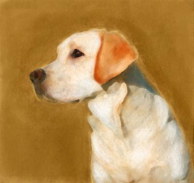 Oil Painting Portrait Of Young Yellow Labrador by Yarvet
