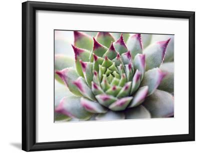 Beautiful Succulent Plant close Up