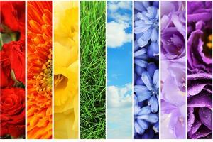 Collage of Beautiful Flowers, Grass and Sky by Yastremska