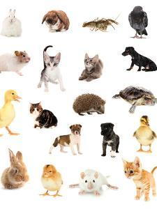 Collage of Different Cute Animals by Yastremska