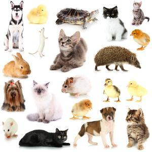 Collage of Different Pets Isolated on White by Yastremska