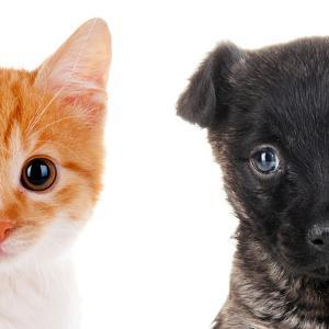 Cute Cat and Dog Faces Isolated on White by Yastremska