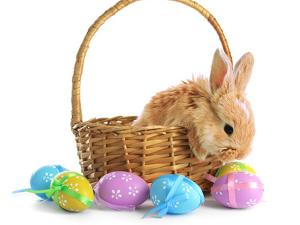 Fluffy Foxy Rabbit in Basket with Easter Eggs by Yastremska
