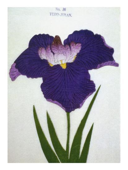 Yedo-Jiman Book of a Purple Iris-Stapleton Collection-Giclee Print