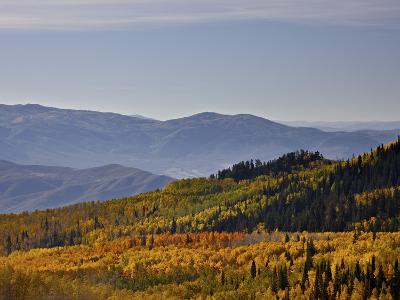 Yellow and Orange Aspens in the Fall, Wasatch Mountain State Park, Utah, USA, North America-James Hager-Photographic Print