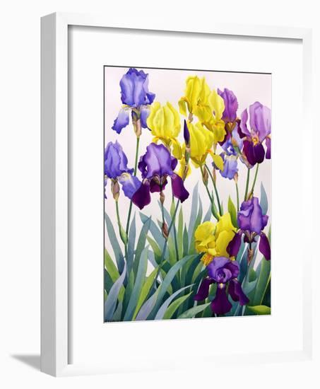 Yellow and Purple Irises-Christopher Ryland-Framed Premium Giclee Print