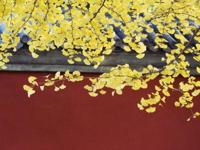 https://imgc.artprintimages.com/img/print/yellow-autumn-coloured-leaves-against-a-red-wall-in-ritan-park-beijing-china_u-l-p7sg3w0.jpg?p=0