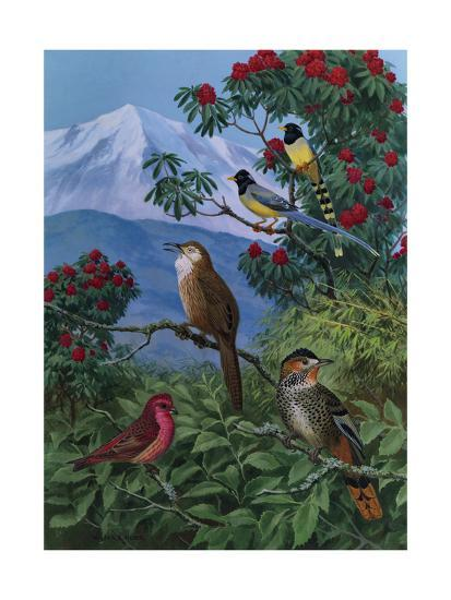 Yellow Billed Blue Magpies, a Rose Finch, Rufous Chinned Laughing Thrushes and Spiny Babbler Perch-Walter A. Weber-Art Print