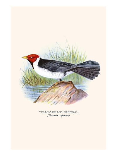 Yellow Billed Cardinal, Brown Throated or Lesser Cardinal-F^w^ Frohawk-Art Print