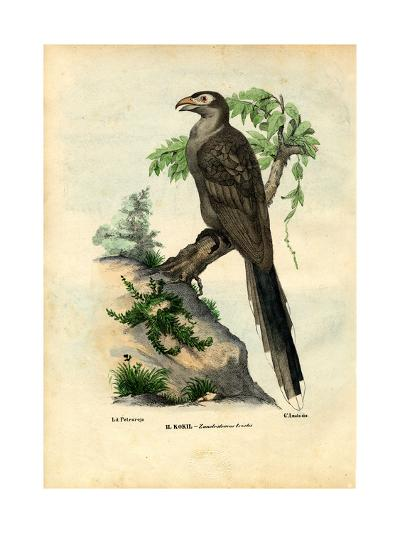 Yellow-Billed Cuckoo, 1863-79-Raimundo Petraroja-Giclee Print