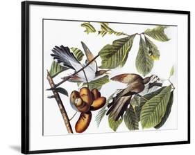 Yellow-Billed Cuckoo-John James Audubon-Framed Giclee Print