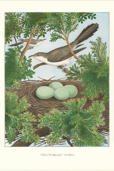 Yellow-Billed Cuckoo--Art Print