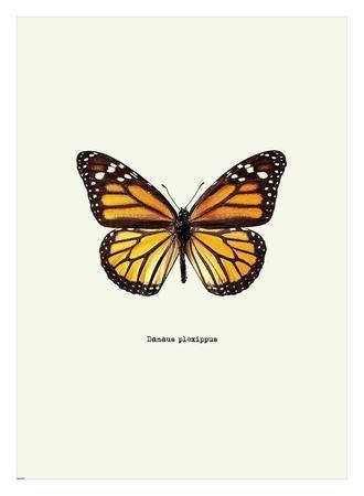 https://imgc.artprintimages.com/img/print/yellow-butterfly_u-l-f8vo360.jpg?p=0