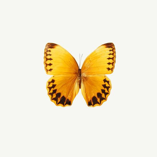 Yellow Butterfly-PhotoINC-Photographic Print