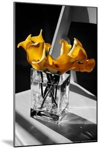 Yellow Calla Lilies in Vase