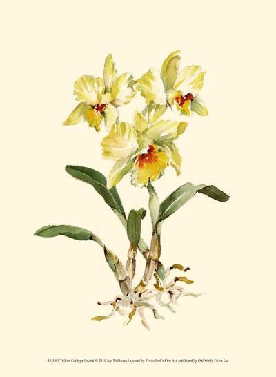 Yellow Cattleya Orchid-Joy Waldman-Art Print