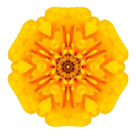 Yellow Concentric Marigold Mandala Flower-tr3gi-Art Print