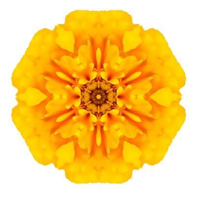 https://imgc.artprintimages.com/img/print/yellow-concentric-marigold-mandala-flower_u-l-pof73b0.jpg?p=0