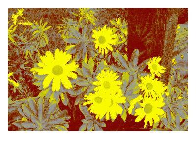 https://imgc.artprintimages.com/img/print/yellow-daisies_u-l-q1bjy3l0.jpg?p=0