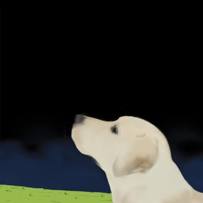 Yellow Dog Profile, 2008-Marjorie Weiss-Giclee Print