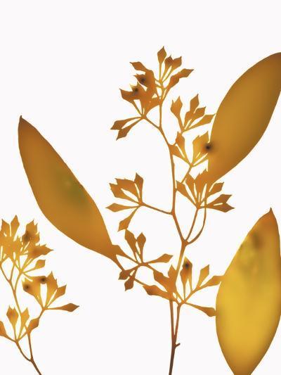 Yellow Eucalyptus-Envision-Photographic Print