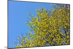 Yellow Flowers on a Blue Sky