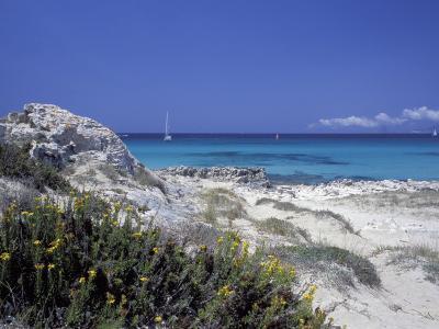 Yellow Flowers on the Beach, Formentera, Balearic Islands, Spain, Mediterranean, Europe-Vincenzo Lombardo-Photographic Print
