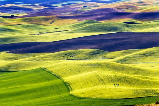 Yellow Green Wheat Fields Black Dirt Fallow Land from Steptoe Butte at  Palouse, Washington State Photographic Print by William Perry | Art com