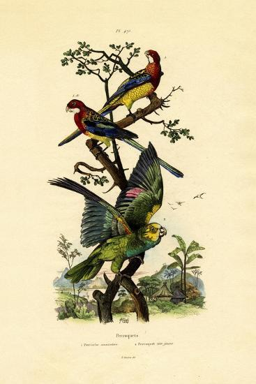 Yellow-Headed Parrot, 1833-39--Giclee Print