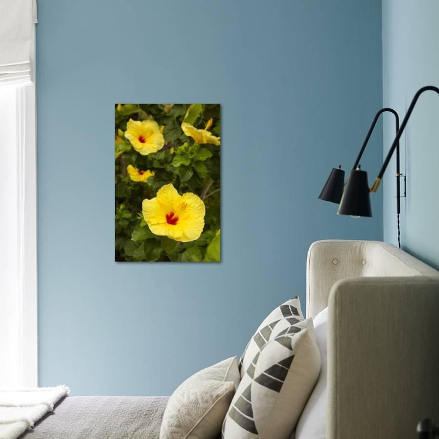 Yellow hibiscus hawaii state flower kailua kona big island yellow hibiscus hawaii state flower kailua kona big island hawaii usa photographic print by douglas peebles art izmirmasajfo