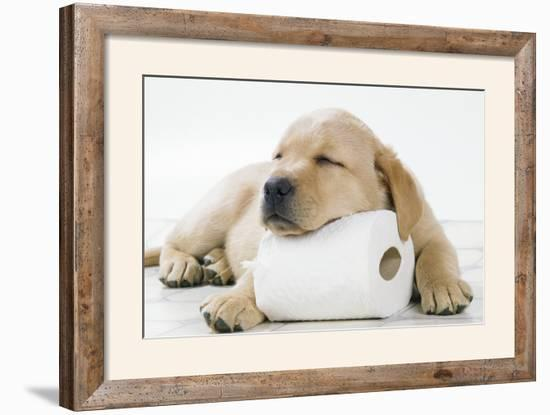 Yellow Labrador Puppy Asleep on Toilet Roll, 9 Weeks--Framed Photographic Print