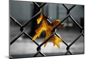 Yellow Leaf in Chain Link Fence