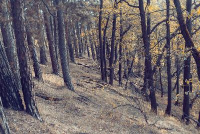 Yellow Leaves Trees-iunewind-Photographic Print