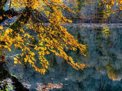 Yellow Leaves2-Nejdet Duzen-Photographic Print
