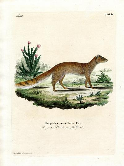 Yellow Mongoose--Giclee Print
